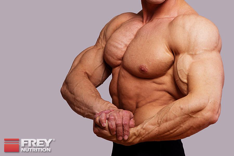 Ein hoher Proteinverzehr ist ohne Nebenwirkungen